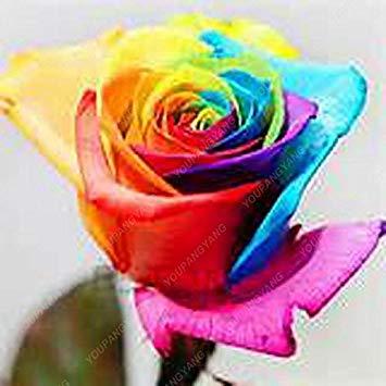 100pcs 20 sortes de graines Rose So Black Rose Charme Bonsai Graines de fleurs vivaces rares fleurs des plantes pour jardin blanc