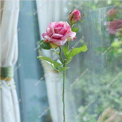 Exotique Miniature Bonsai Fleur Rose Rosas Graine Bricolage jardin et maison embellissant de purification d'air 110 Pcs/Sac 8