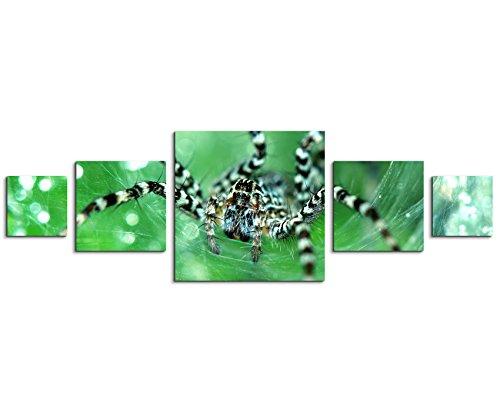 Sinus Art Wandbild 5 teilig 160x50cm - Tierfotografie – Wolfsspinne mit schwarz weißem Muster