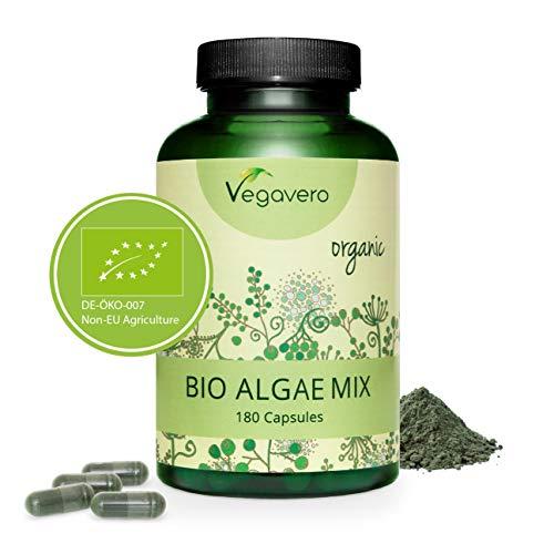 laminaria alga