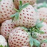 heiße verkaufen50pcs Weiße Erdbeer-Samen süße Aroma Bonsai DIY Hausgarten