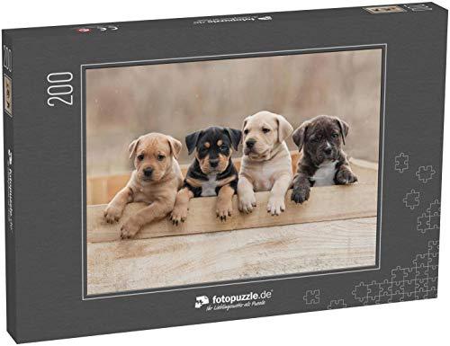 Puzzle 200 Teile Amerikanische Staffordshire Terrier Welpen sitzen in Einer Box - Klassische Puzzle, 1000/200/2000 Teile, in edler Motiv-Schachtel, Fotopuzzle-Kollektion 'Tiere' -