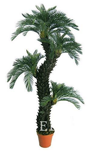 Shopmeeko Samen: 20 Stück ein Beutel, Dracaena Bonsai, Topf Balkon, Pflanzung Jahreszeiten, Dracaena fragrans, 4F304F -
