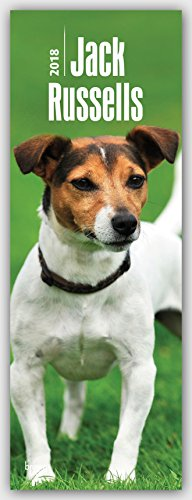 Jack Russell Terriers 2018. Slimline Calendar for sale  Delivered anywhere in UK