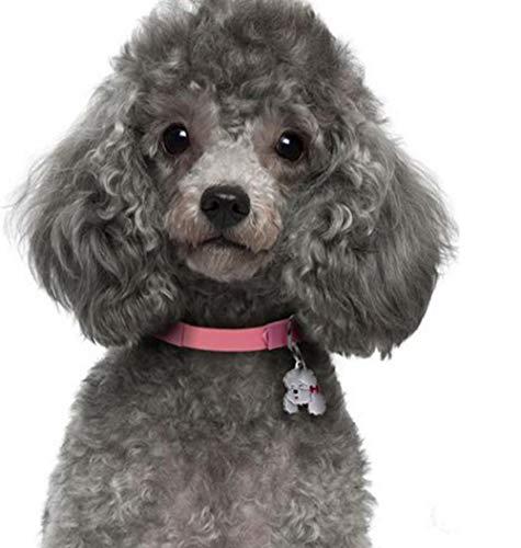 Niedlicher Hund Haustier Bild Diamant Sticken Pudel Diamant Malerei Kreuzstich Strass Mosaik Diamant Bild Größe: 40 * 50 cm ()
