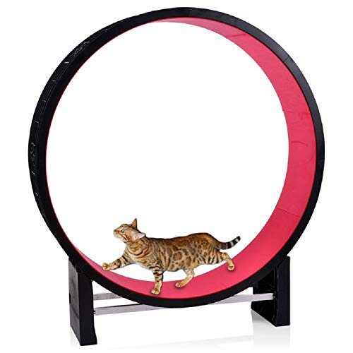 Paylesswithss Roue d'exercice pour Chat Intérieur Montage...
