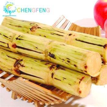 Shopmeeko 100 stücke China Zuckerrohr pflanzen Gemüse Und Obst bonsai Outdoor Bonsai Pflanzen Einfach Zu Wachsen Für Haus & amp; Garden Diy Plant Sement: Burgund (Amps Hause Zu Für)