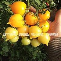 Go Garden 500 Unids Multi-Color Tomate Fresco Plantas Suculentas Orgánicas Non-Gmo Sabrosa Fruta Vegetal Antienvejecimiento Planta/Plante Para Jardín De Su Casa: 100 Pcs -16