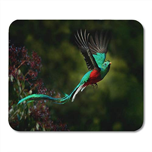Gaming Mauspad Flying Resplendent Quetzal Pharomachrus Mocinno Savegre in Costa Rica Green 11.8