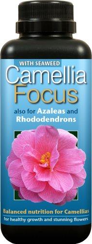 camellia-focus-balanced-liquid-concentrated-fertiliser-500ml