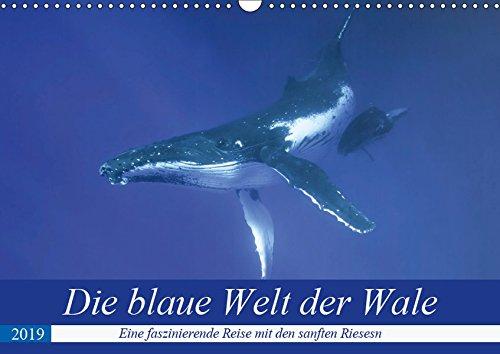 Die blaue Welt der Wale (Wandkalender 2019 DIN A3 quer): Eine fantastische Reise in die Tiefen des Pazifiks mit den gigantischen Buckelwalen (Monatskalender, 14 Seiten ) (CALVENDO Tiere)