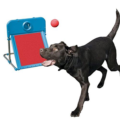 Rosewood - Pelota de flyball de agilidad para perro