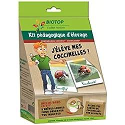 Kit pédagogique élevage Coccifly / Coccilaure