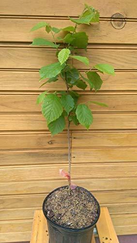 Bio-Saatgut nur Nicht Pflanzen: 3 24