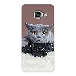 Enticing Kitty Photographer Multicolor Back Case Cover for Galaxy A3 2016