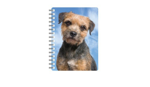 Border Terrier in Jumper A6 Card