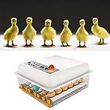 SEAAN Incubadora Doméstica de Huevos Temperatura Ajustable Torneado Automático de Huevo, Máquina Incubadora para Huevos de Gallina, Huevos de Pato, Huevos de Ganso, Huevos de Paloma