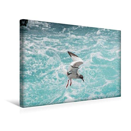 Calvendo Premium Textil-Leinwand 45 cm x 30 cm Quer, Gabelschwanzmöwe | Wandbild, Bild auf Keilrahmen, Fertigbild auf Echter Leinwand, Leinwanddruck Orte Orte