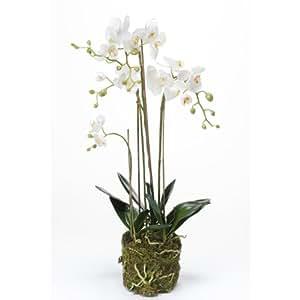 Orchidée Phalaenopsis artificielle PABLA en motte, blanche-jaune, 80 cm - fleur artificielle / orchidée décorative - artplants