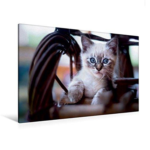 Premium Textil-Leinwand 120 cm x 80 cm quer, Lieblingsplatz | Wandbild, Bild auf Keilrahmen, Fertigbild auf echter Leinwand, Leinwanddruck (CALVENDO Tiere)