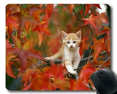 Yanteng Ojos Verdes Gatito Animal Gato 190103-002 de Yanteng