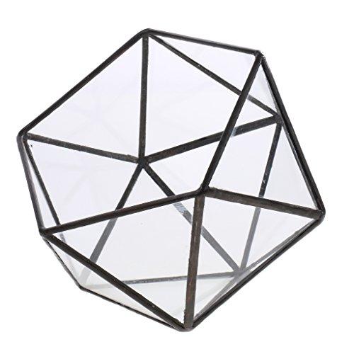 MagiDeal Klare Glas geometrische Terrarium Box Sukkulent Pflanze Pflanzer - 17 x 17 x 17cm schwarz (Terrarium Glas)