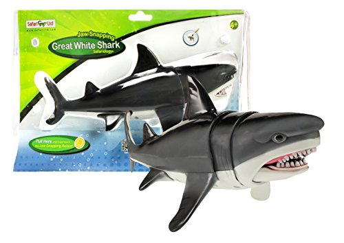 at White Shark ()