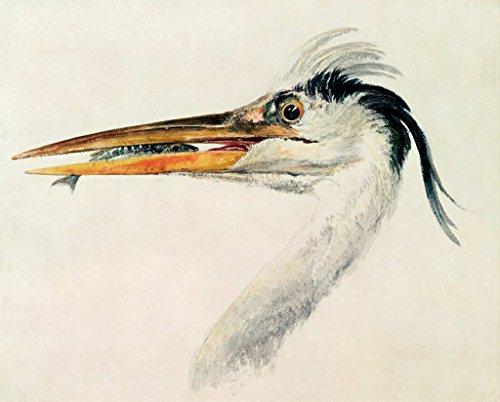 Kunst für Alle Impresión artística/Póster: Joseph Mallord William Turner Heron with a Fish - Impresión, Foto, póster artístico, 100x80 cm