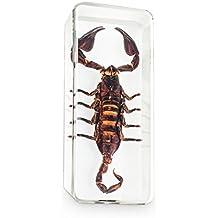 Pisapapeles con escorpión negro natural, incluído en un bloque de resina sintética transparente