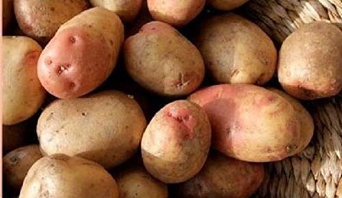 Preisvergleich Produktbild Portal Cool 1 kg: 1 kg König Edward Saatkartoffeln - Certified Irish Seed (Klasse Se) Maincrop