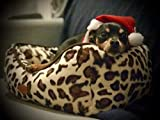 TräumSchön Edles Hundebett Leopard - Hochwertiges waschbares Hundekissen - optimaler Hundekorb für Kleine Hunde und Mittlere Hunde - Katzenbett