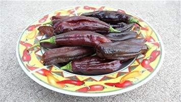 PLAT FIRM: 10+ Samen von Aji Panca Pfeffer Capsicum Chinense