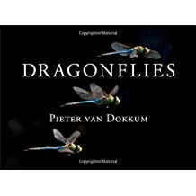 Dragonflies - Magnificent Creatures of Water, Air, and Land
