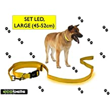 ECOBELLE® set Collar de perro + Correa de perro luminoso LED, Alta Visibilidad y Securidad por la noche, 3 Modos de luz, USB Recargable (2 cables USB incluidos), color AMARILLO. Tamaño correa 1.20m, Tamaño collar GRANDE 45-52cm (regulable)