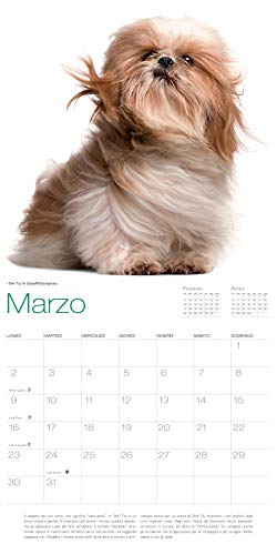 Zoom IMG-3 cani calendario 2020 da muro