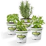 Kit Albahaca + Menta + Romero + Hierbabuena Plantas en Maceta 10cm Plantas Aromáticas