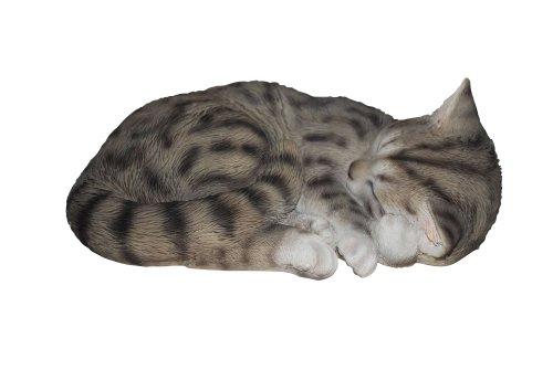arti-vivid-reallife-gatto-dorme-tigrato-dimensioni-b