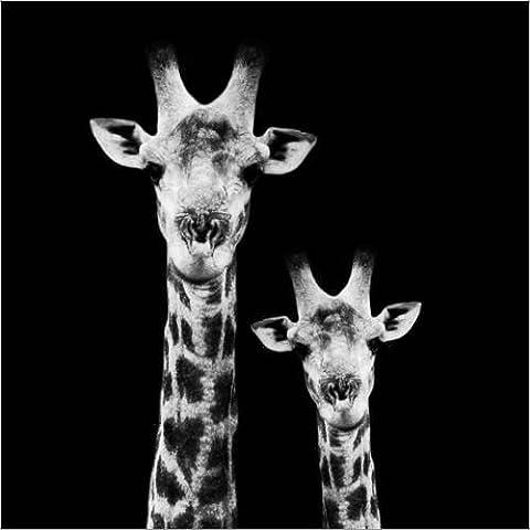 Stampa su tela 70 x 70 cm: Safari Profile Collection - Portrait of Giraffe and Baby Black Edition II di Philippe HUGONNARD - poster pronti, foto su telaio, foto su vera tela, stampa su tela