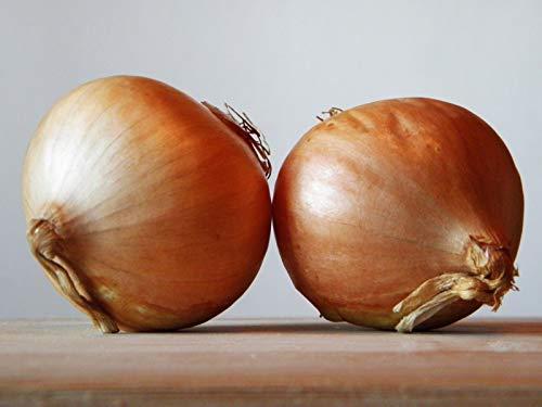 PLAT FIRM GERMINATIONSAMEN: 8K-Samen oder 1 Unze: Zwiebel Texas Early Grano Seeds von Zellajake Viele Größen Microgreens oder Garden 53C