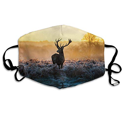 Masken, Masken für Erwachsene, Red Deer in Morning Sun Reusable Anti Dust Face Mouth Cover Mask Protective Breath Healthy Safety