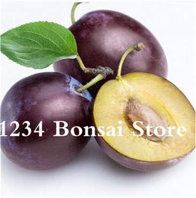 Bloom Green Co. Haute qualité 20 pcs Rare Noir Brin prune Bonsai fruit délicieux douce bio arbre & quot; krim noir & quot; Légumes et fruits Plante en pot: 10