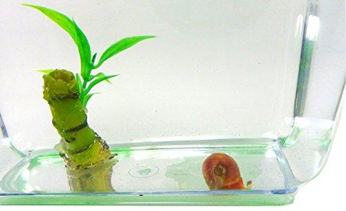 Aquarium Set Posthorn Wasser Schnecke mit Pflanze und Aquarium Kinder Erwachsene Aqua Snail Plant Einsteiger Starter Set (1Stk rot) 4793