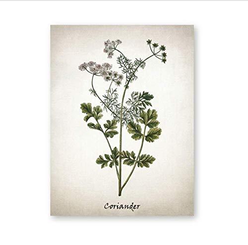 Botanische Kräuter (Kraut Leinwand Kunst Malerei Vintage Kräuter Illustrationen Poster und Drucke Küchenkräuter Botanische Küche Wandkunst Bild Dekor J)