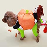 Outtybrave - Disfraz de Papá Noel para Perros, Año, diseño de Calabaza según Imagen M