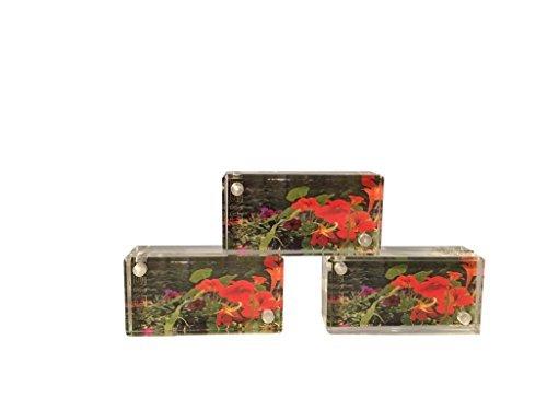 Die Mini Acryl Museum Magnet 2x 1-Rahmen von Canetti-2x 1 -