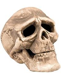 Crâne de décoration, pour décorer votre maison, salle ou table de fête d'Halloween Ce crâne de squelette effraiera vos invites Ne privez pas vos convives de cette occasion de rire ou de frissonner d'effroi