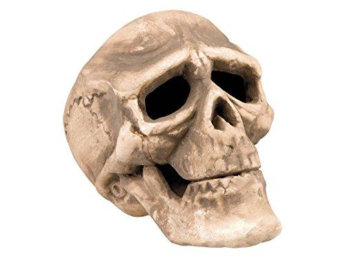 Alsino Totenkopf Deko Halloween Dekoration Totenschädel Skull, wählen:Totenkopf beige Styropor (Totenschädel Halloween)