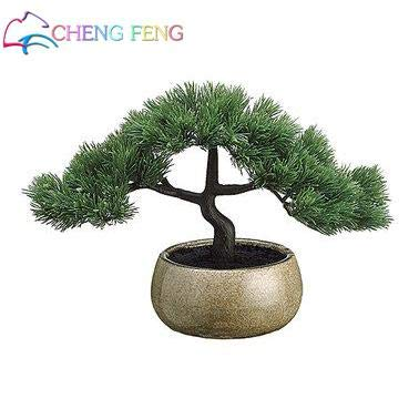 Pine Tree Garden Seeds (Shopvise 20 Particles/Bag Pine Seed Seeds Pinus Thunbergii Seeds Teach You How to Grow Potted Courtyard Garden Seeds : Violet)