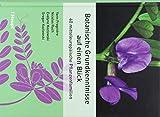 Botanische Grundkenntnisse auf einen Blick: 40 mitteleuropäische Pflanzenfamilien - Yann Fragnière, Nicolas Ruch, Evelyne Kozlowski, Gregor Kozlowski