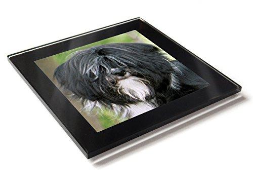 Moody Motorz Tibet-Terrier Hund-Untersetzer, Glas, mit Geschenk-Box -